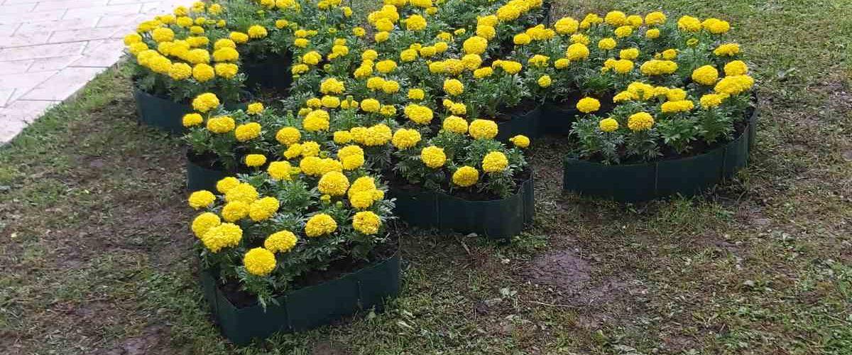 """""""Cvijeće za građane Breze, zlatni ljiljani za naše šehide """""""