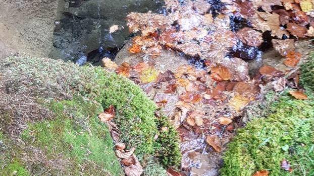 Izvorište Mahmutović Rijeka, danas samo 8 l/s vode, ne pamti se ovako nizak nivo u historiji ovog vrela.